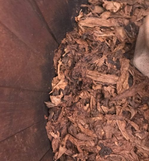 hojas-de-tabaco-en-barril