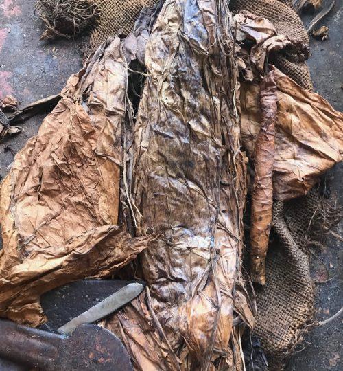hojas-de-tabaco-natural-organico
